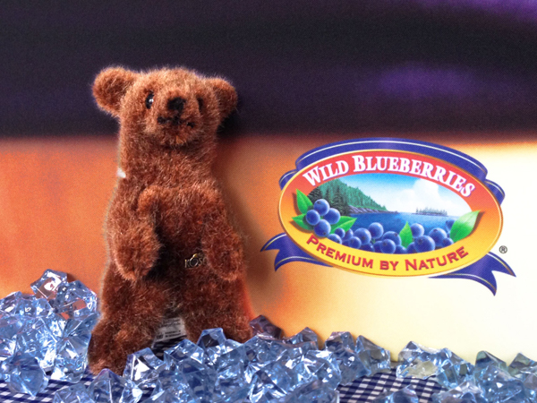 Blaubeer Bär Kopie